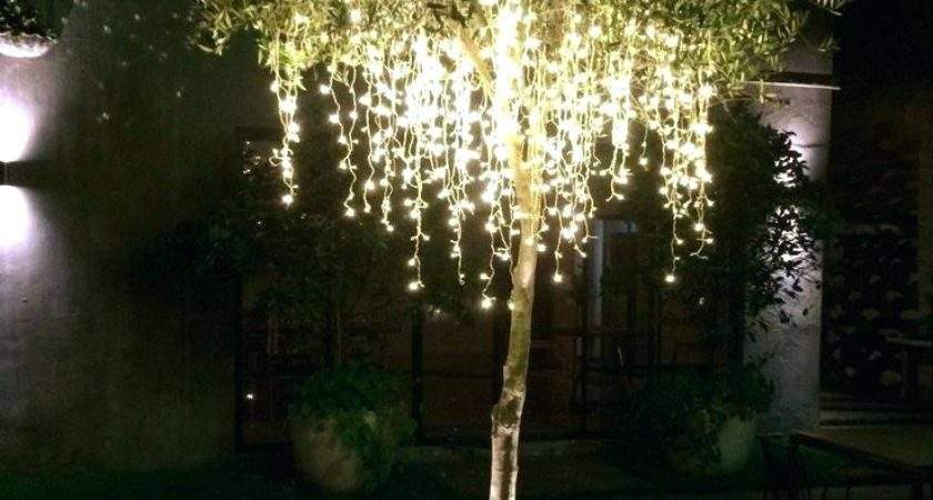 Decorate Outdoor Trees Lights Led Fruit Tree