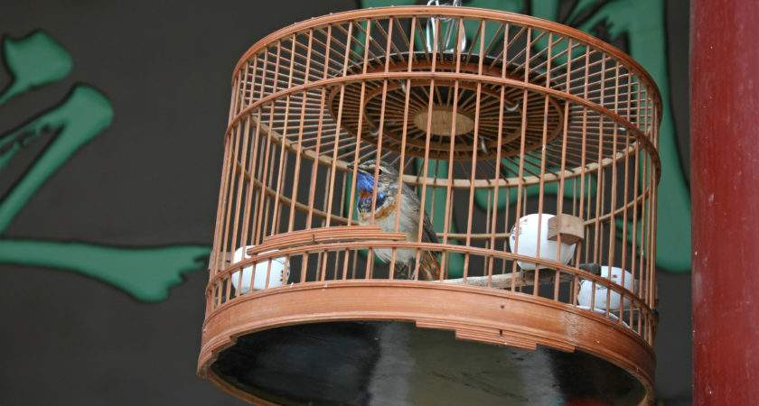 Need Know Bird Cage Designs Cages Sale